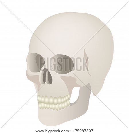 skeleton of the human skull icon, vector ilustraction design