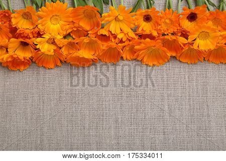 Orange flowers of marigolds on the background of natural linen fabric.