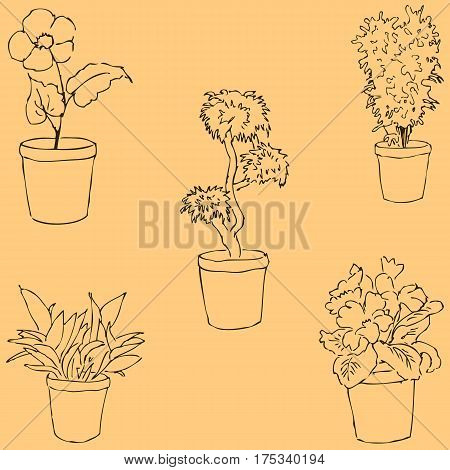 Houseplants. Sketch by hand. Pencil drawing by hand. Vector image. The image is thin lines.