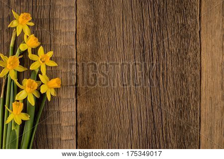 Daffodils on wooden background copy space.Top view.
