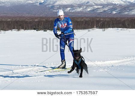 Competitions On Skijoring (skijor Races) In Kamchatka