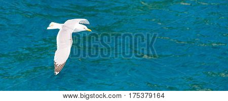 White Fish seagull flying over the sea with wings spreaded. Freedom concept banner