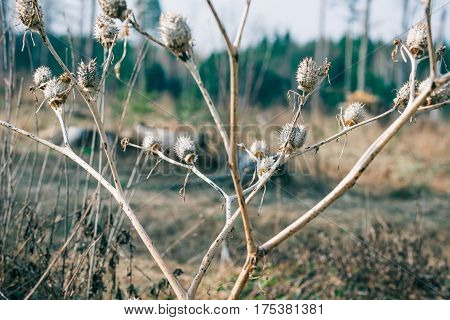 Dry plant on toxic polluted area. Close-up