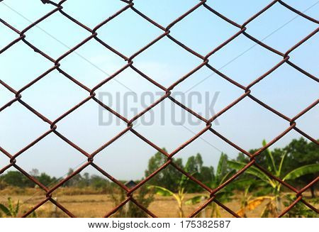 Iron Mesh with Independence, Longing for Loneliness
