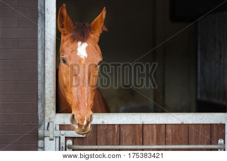Head of horse looking over the stable window