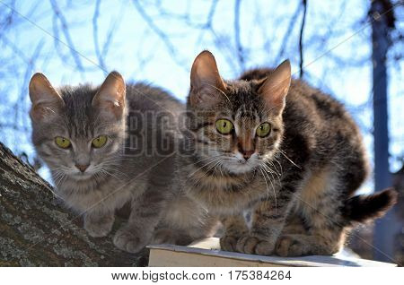 Two small kittens on a tree - a walk in the spring
