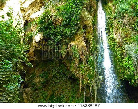 Waterfall landscape.David falls Ein Gedi.Water pure stream in green oasis.Spring and nature reserve.National park.West of the Dead Sea area.Israel.