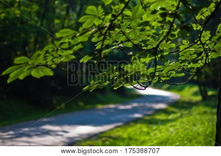 Curve of a forest road at summer in Kosutnjak, Belgrade Serbia