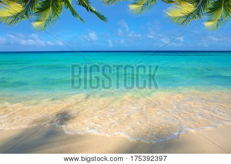 Beautiful caribbean sea and green palm leaves . Sommer ocean landscape as background.
