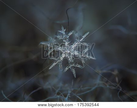 Macro photo of real snowflake: small snow crystal of stellar dendrite type with star-shaped, bright center and thin, sharp arms with side branches and excellent symmetry, glittering on dark cyan wool background in diffused light of winter sky.
