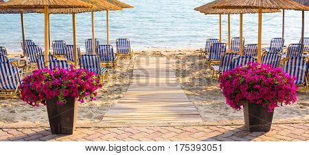 Sandy beach with flower pots of purple flowers near the wooden path to the sea among the authentic umbrellas in Greece coast.