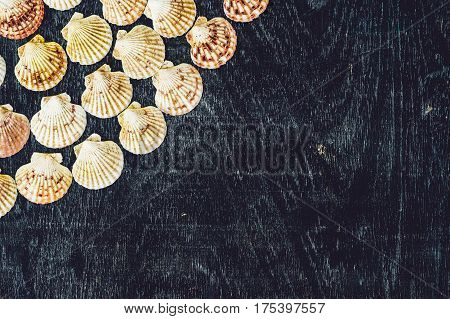 Background Of Shells Of Scallops On An Old Wooden Background. Sea Concept
