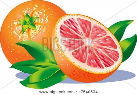 Vector image of two grapefruits