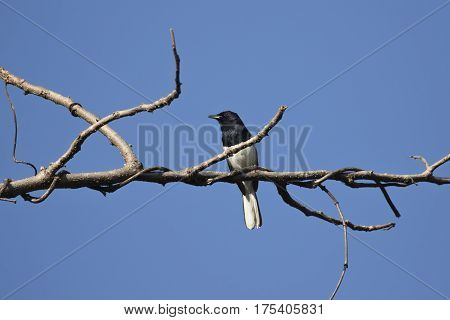 Image of birds perched on the branch.
