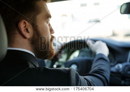 Back view of a young bearded business man driving car