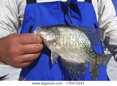 Fisherman holding a Crappie caught while ice fishing