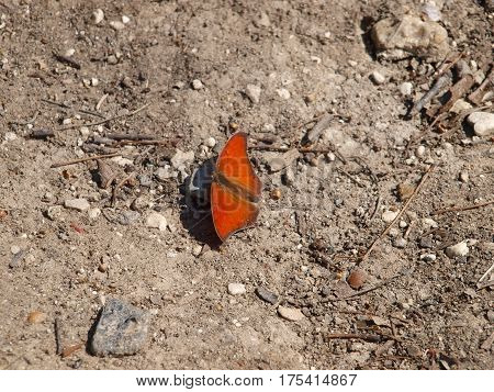 An orange winged garden variety butterfly sits on a small stone on a gravel sand background.