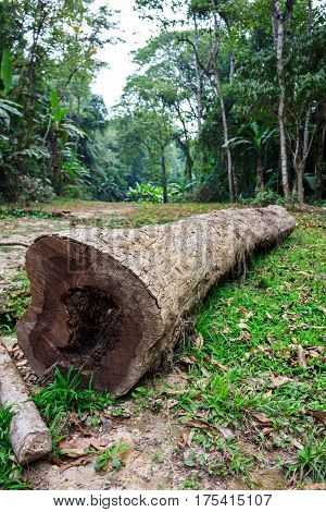 The trunk of a fallen tree in a green forest. Deforestation or global warming concept environmental issue. Outdoor on summer day.