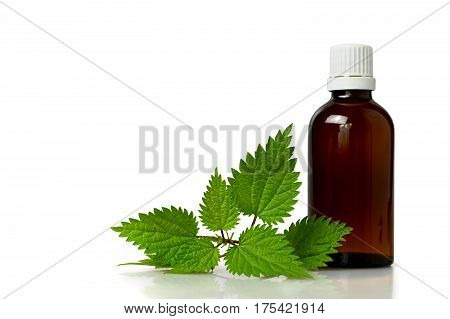 Stinging nettle essential oil isolated on white