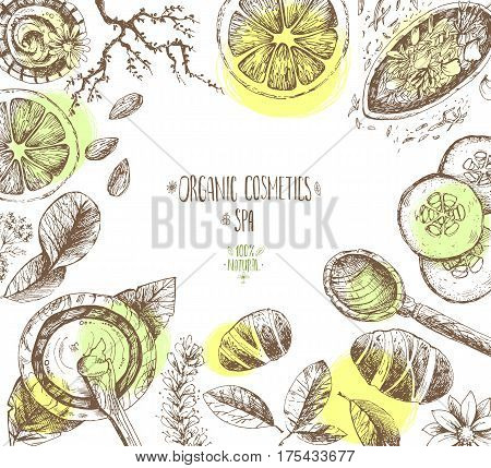 Hand drawn vector frame background, organic cosmetics, spa. Natural herbal products, citrus, cucumber, zucchini, flower petals, chamomile almond Vintage engraving sketchy style
