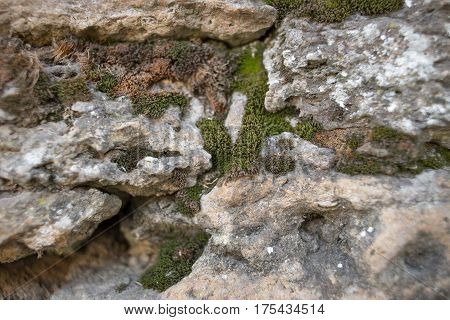 the old stone wall all overgrown with grass and moss