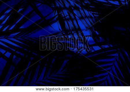 Palm leaves on a marble surface natural lighting from a window background with a filter