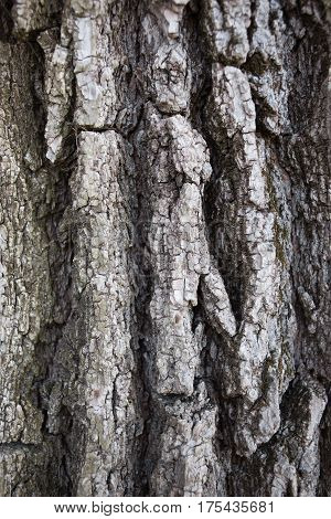 the background and texture of tree bark close-up