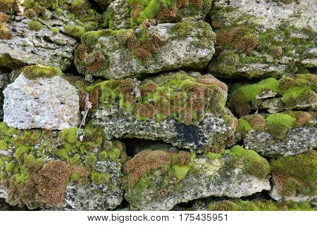 background of stone wall covered with moss plants
