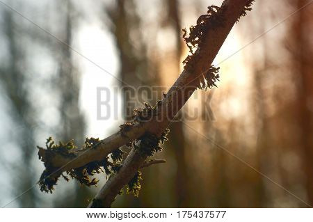 Dosh on a branch in the sunlight in bayreuth