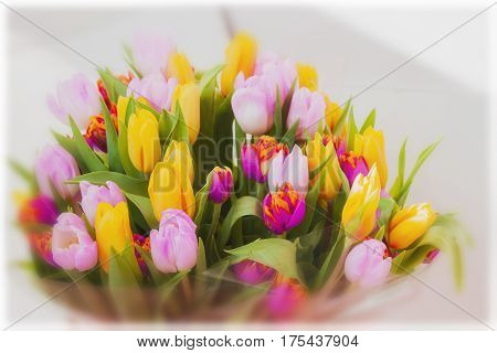 Flowers tulips. Colored bouquets of tulips. Cocept of Women's Day, Mother's Day, Valentine's day, 8 march, Greeting card for all occasions, especially spring