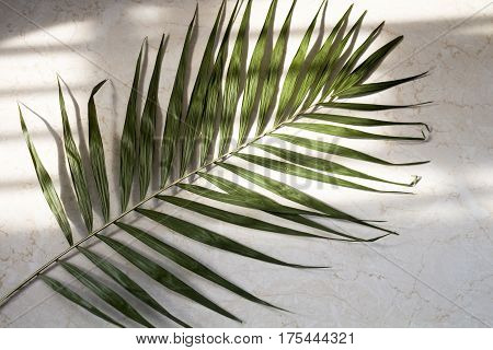 Palm leaf on the marble surface natural lighting from the window