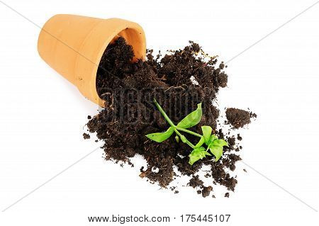 flower pot with spilled out soil isolated damage concept