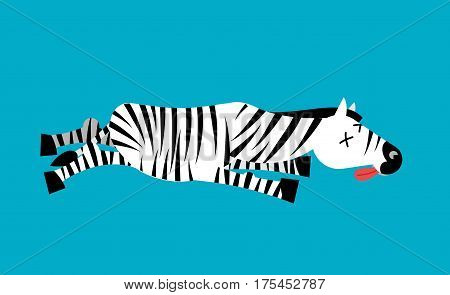 Dead Zebra. African Animal Deceased. Corpse Of Wild Beast