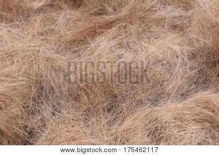 Dog brown hair closeup. Dogs hair background.