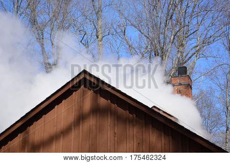 Steam billowing from a maple syrup sugar shack