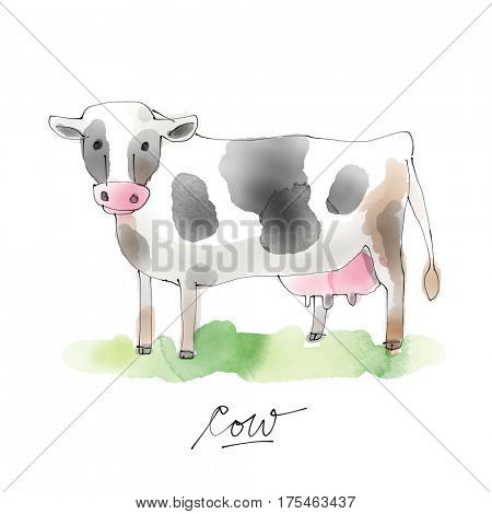 Cow Watercolor illustration