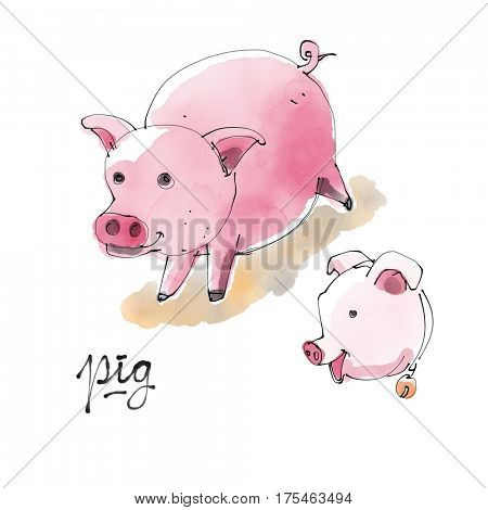 Pig Watercolor illustration
