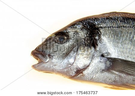 Fish sea bass closeup on a white background. Mediterranean delicious fresh fish