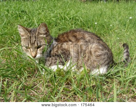 poster of domestic cat having a break