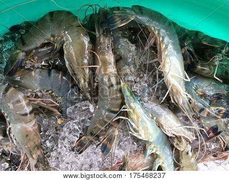 Prawns live displayed on ice at Asian street market in turquoise  container.  Close up.  Directly above.  Horizontal image.  Photography.