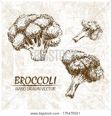 Digital vector detailed broccoli hand drawn retro illustration collection set. Thin artistic linear pencil outline. Vintage ink flat style engraved simple doodle sketches. Isolated objects