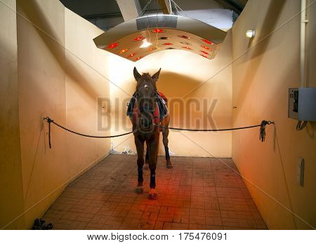 Thoroughbred stallion enjoy equine solarium on animal farm rural scene