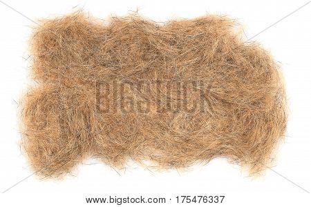 Dogs Brown Hair Closeup
