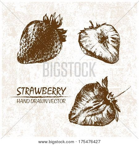 Digital vector detailed strawberry hand drawn retro illustration collection set. Thin artistic linear pencil outline. Vintage ink flat style engraved simple doodle sketches. Isolated objects