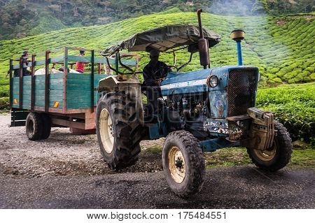 Cameron Highlands, Malaysia on October 19, 2016: Truck with tea and workers driving at BOH tea plantation