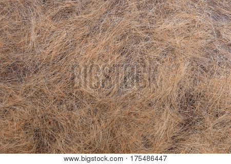 Dogs Hair After Molting