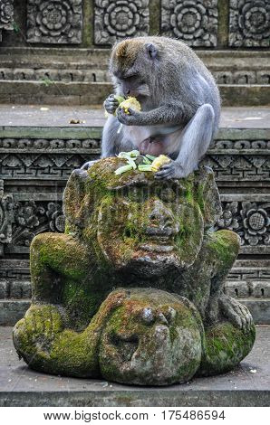 Macaque In The Hindu Temple In Monkey Forest, Ubud, Bali