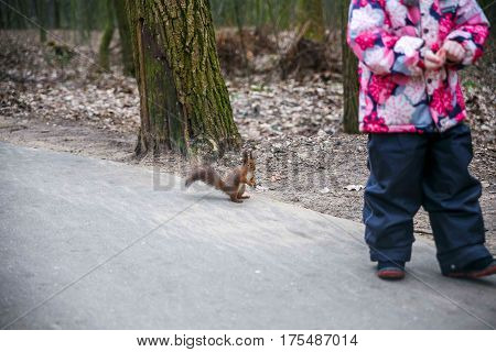 Squirrel jumping in the trees and playing in the park