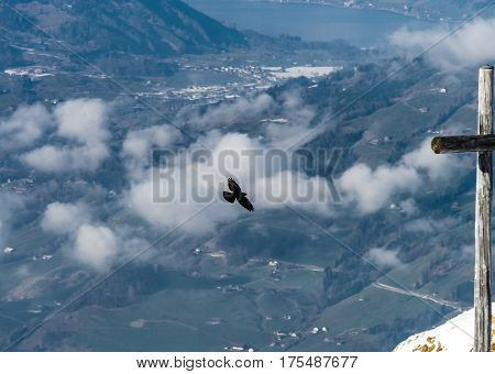 Aerial View Of Bird Flying Over The Land