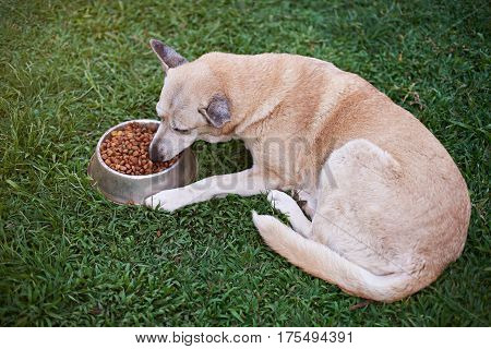 One Brown Dog Eat In Yard